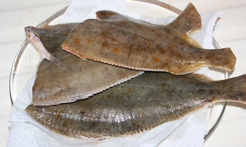 FlounderBeforeFrying1