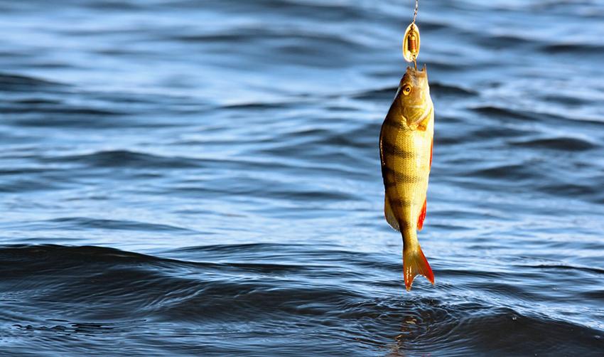 когда лучше ехать на рыбалку