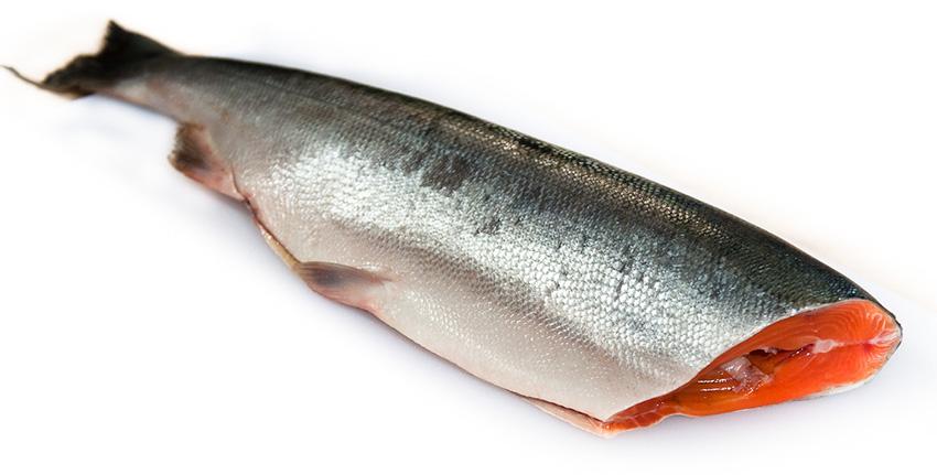 активатор клева fishhungry состав