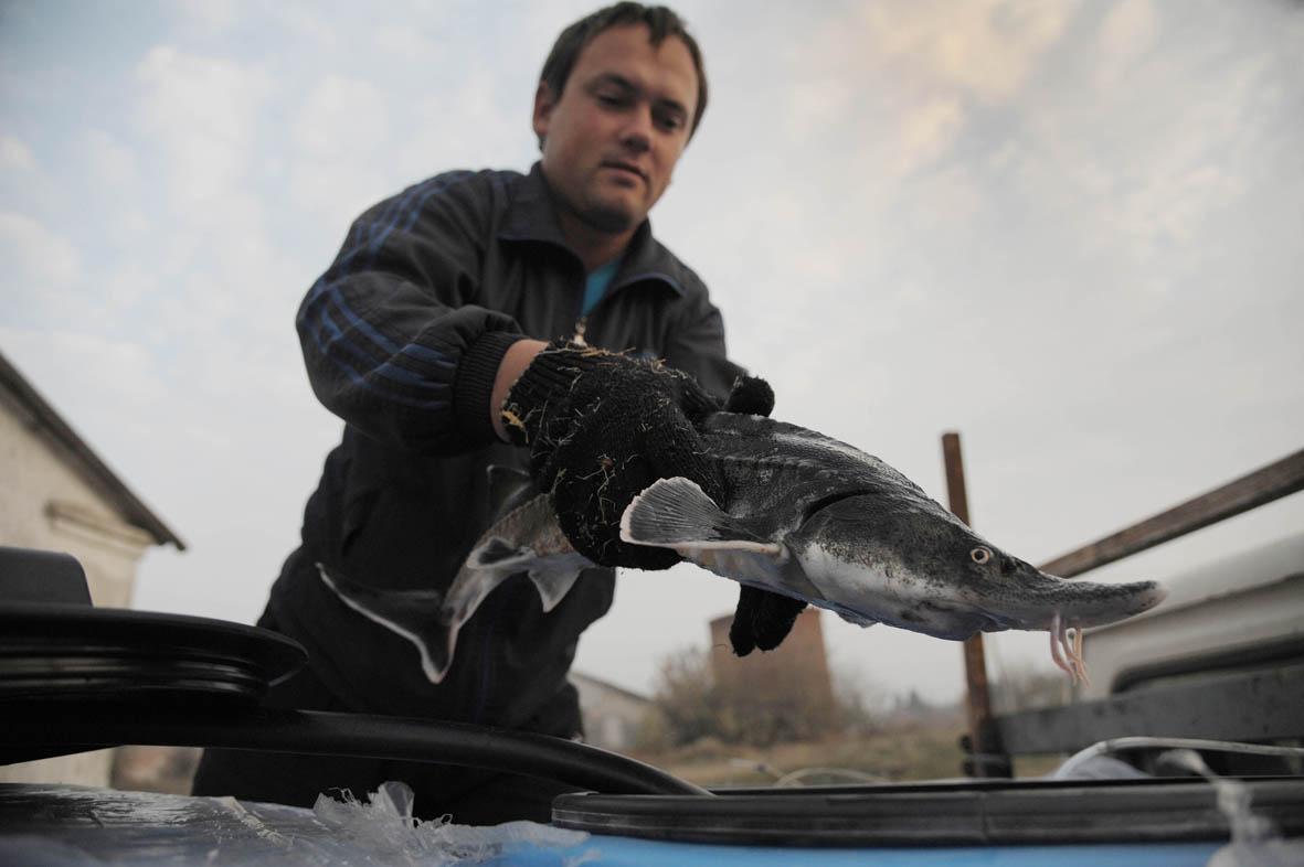 Зимняя кормушка для рыбалки