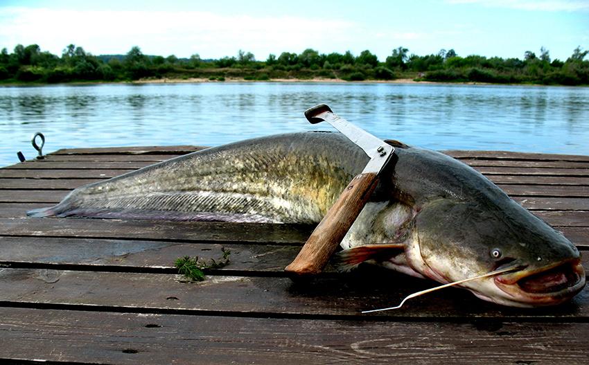 Термос для рыбалки