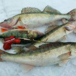 Блесна Вильямс (Williams) на судака для зимней рыбалки