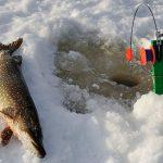 Как сделать жерлицу для зимней рыбалки своими руками — рекомендации и чертежи