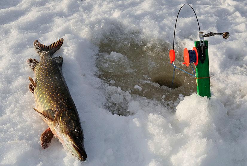 Как сделать жерлицу для зимней рыбалки своими руками - рекомендации и чертежи