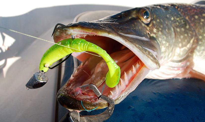 Cиликоновые приманки для лова хищной рыбы - виды, цены, цвет, топ лучших приманок