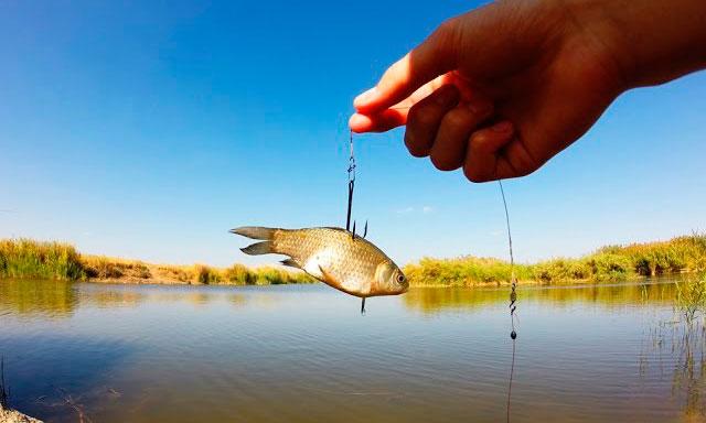 живец ловля рыбы