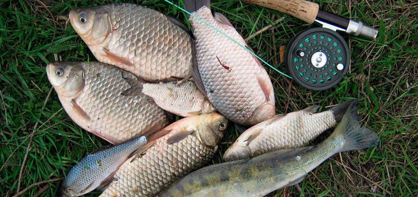 капли прикормки рыбы