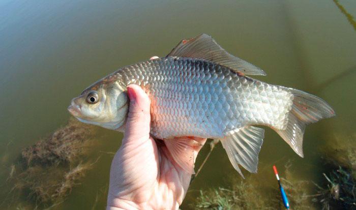 Отдых в подмосковье с рыбалкой недорого