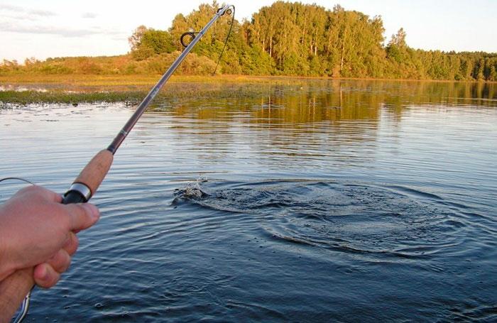 рыбалка в архангельской области по вычегде лето