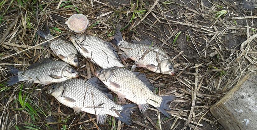Как варить горох на рыбалку