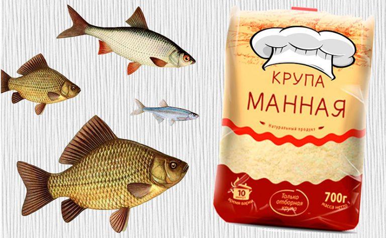 Как сделать манку для рыбы