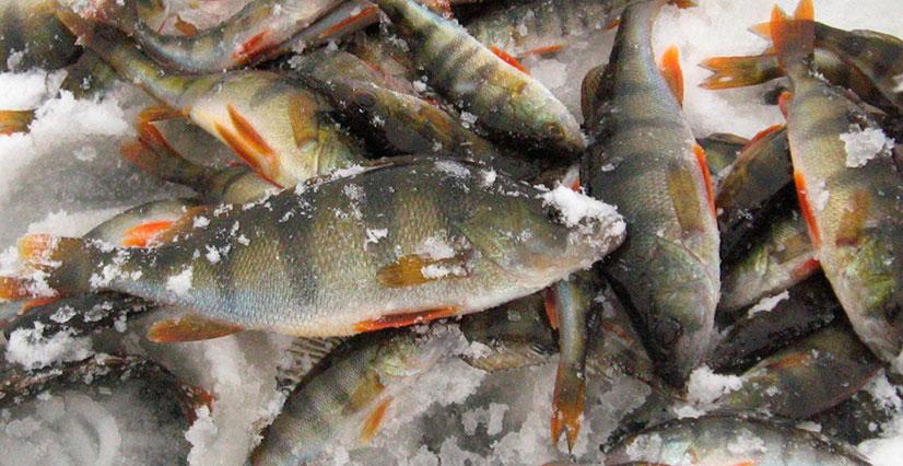 Способы увеличения улова рыбы