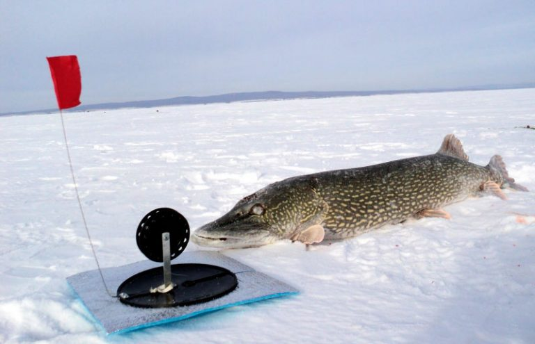 рыбалка на щуку на жерлицы в сибири