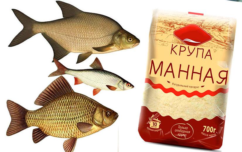 Ловим рыбу на манку - типы насадок, способы приготовления