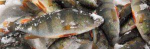 подводная съемка ловли окуня