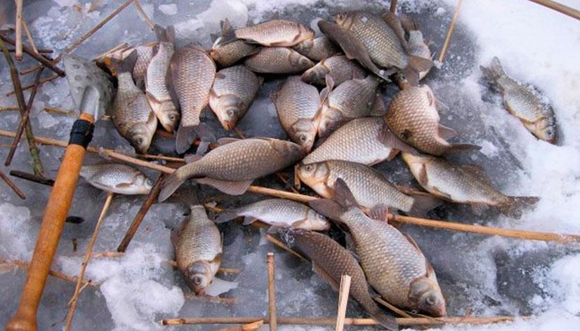 Ловля карася зимой на мормышку - особенности ловли по месяцам, выбор мормышки и наживки