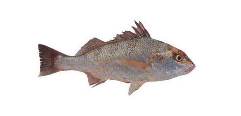 Вкусная рыбалка