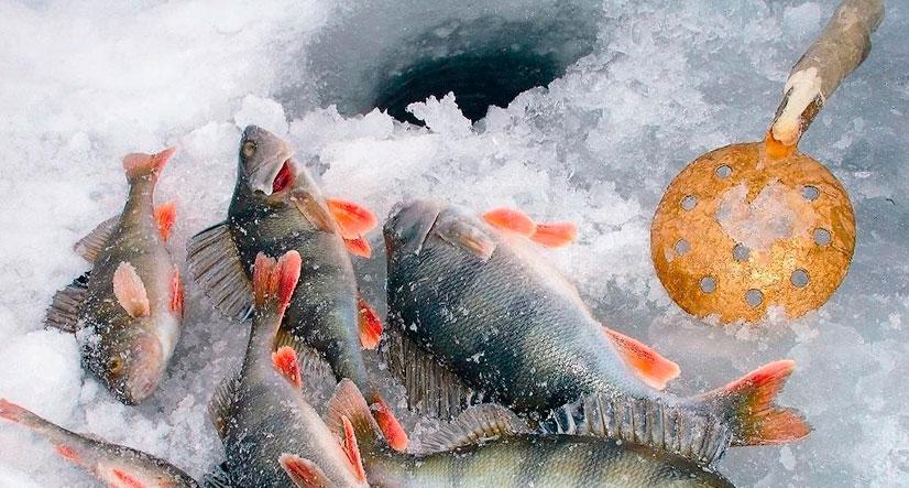 как правильно ловить рыбу на вертушку видео