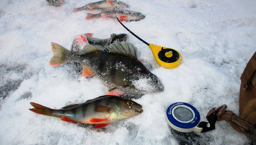 когда рыба клюет на безмотылку
