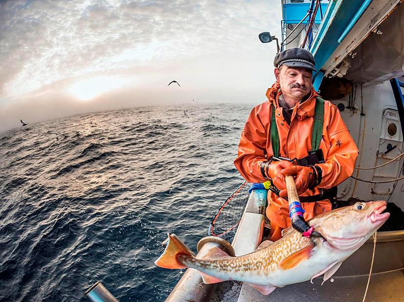 рыба судак как приготовить