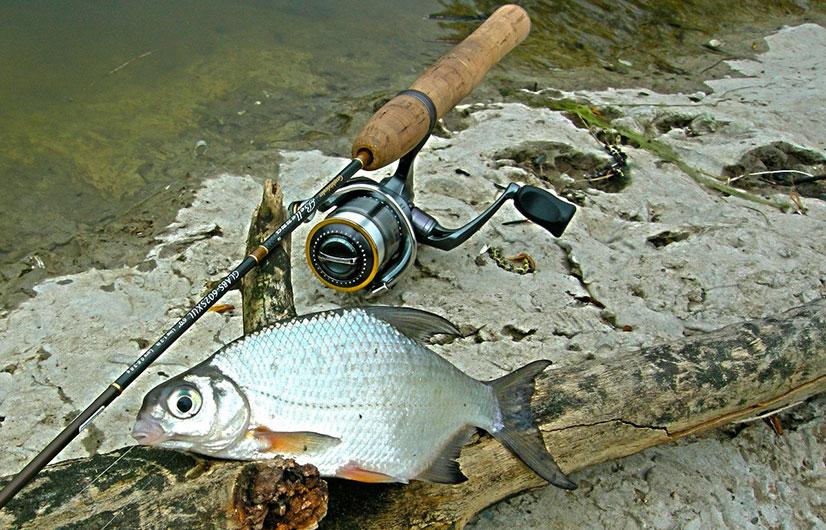 Советы, как определить возраст рыбы