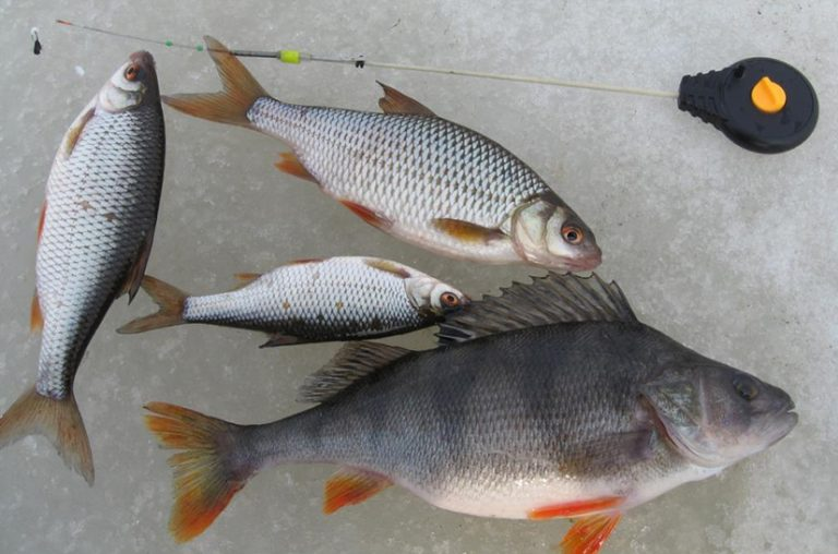 ловля рыбы в ярославле
