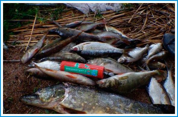 elektronnaya-primanka-dlya-ryby-fishmagnit-2-opisanie-princip-raboty-otzyvy2