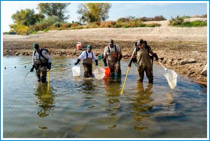 на что ловить рыбу в болоте