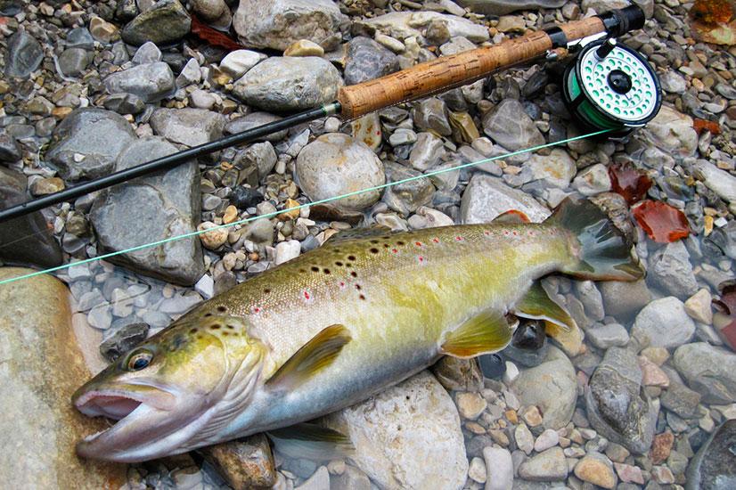 uros-kristan-brown-trout-iski-vintgar-39-cm-15-10-2014