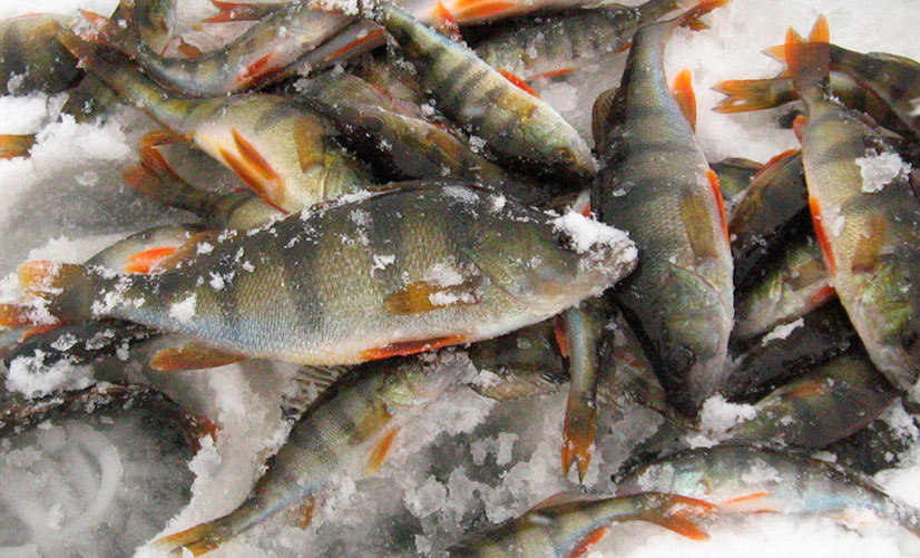zimnyaya-rybalka-na-okunya-sovety-i-otzyvy