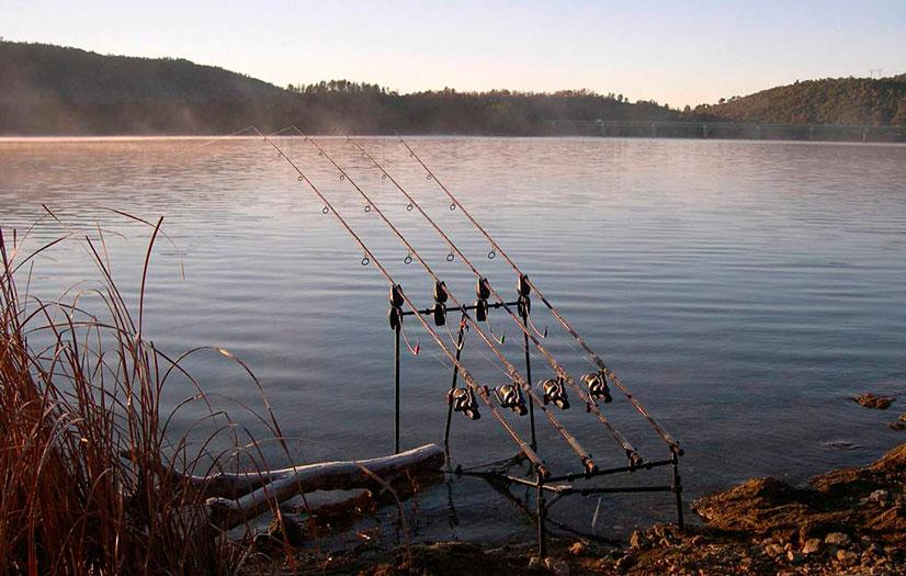 где в ярославской области клюет рыба