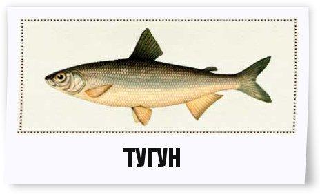 Рыбалка спиннинг окунь