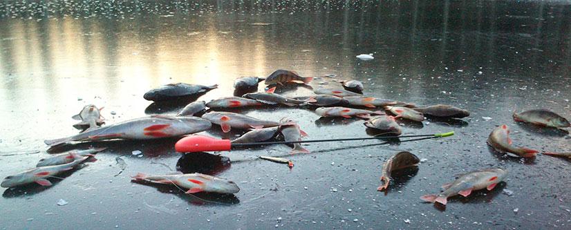 Снасти для зимней рыбалки на окуня