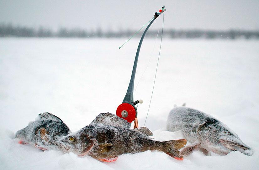 ловля окуня в лесных озерах
