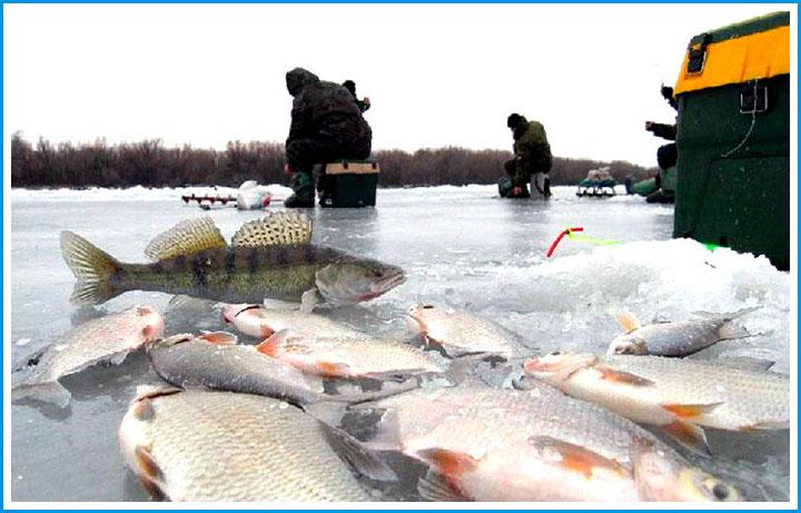 отчеты о рыбалке в подмосковье за последнюю неделю