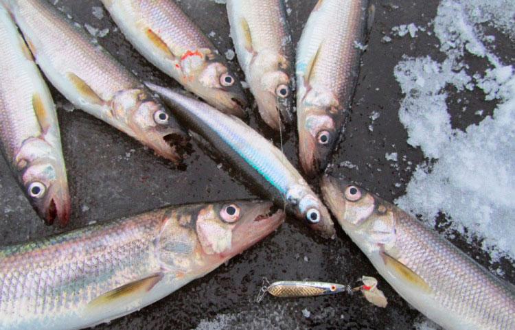 как сделать бойлы для рыбалки