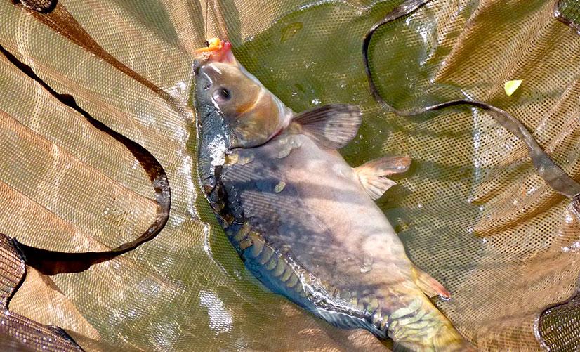 Горох на рыбалке для наживки и прикормки - рецепты приготовления и отзывы