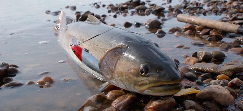Особенности рыбалки на Амуре