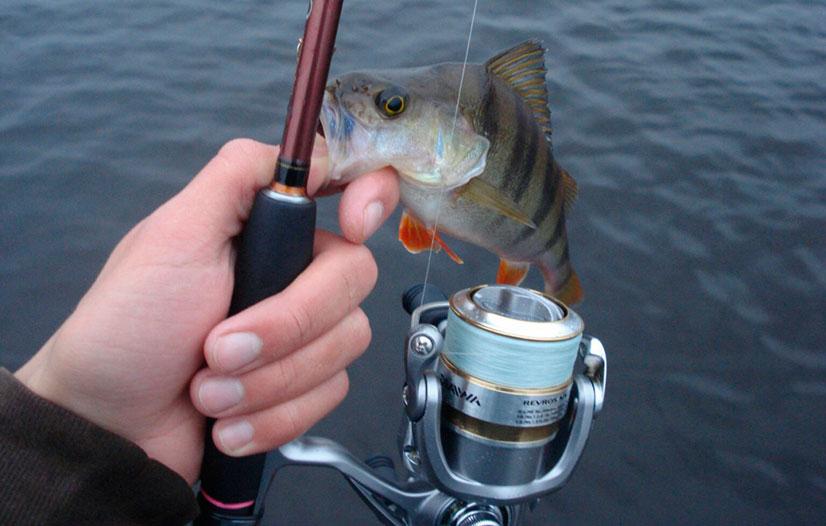 рыбалка на реке выя свердловская область