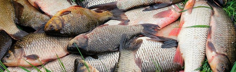 Прогноз клева рыбы и график клева по месяцам