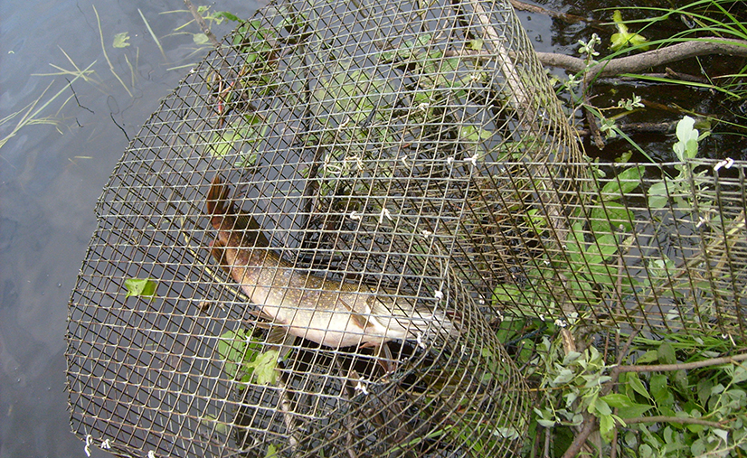 Морда для рыбалки