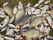 Ратлины для зимней рыбалки на судака