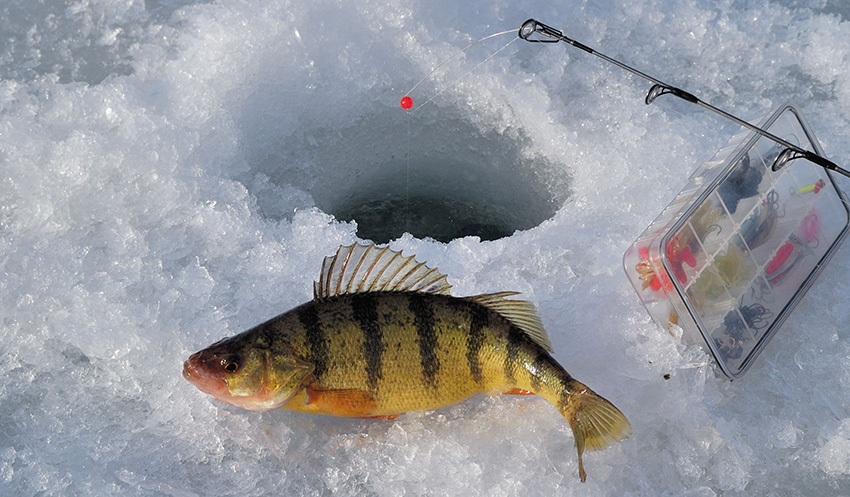 ice_perch
