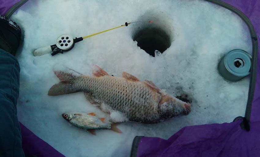Ловля карпа зимой на пруду. Хитрости и секреты