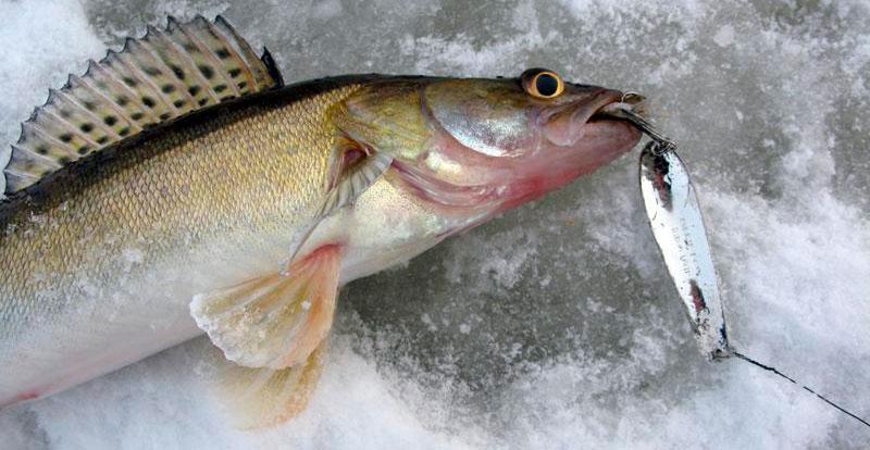 Распространенные виды зимних блесен для рыбалки на судака