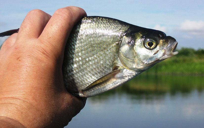 Советы от опытных рыбаков