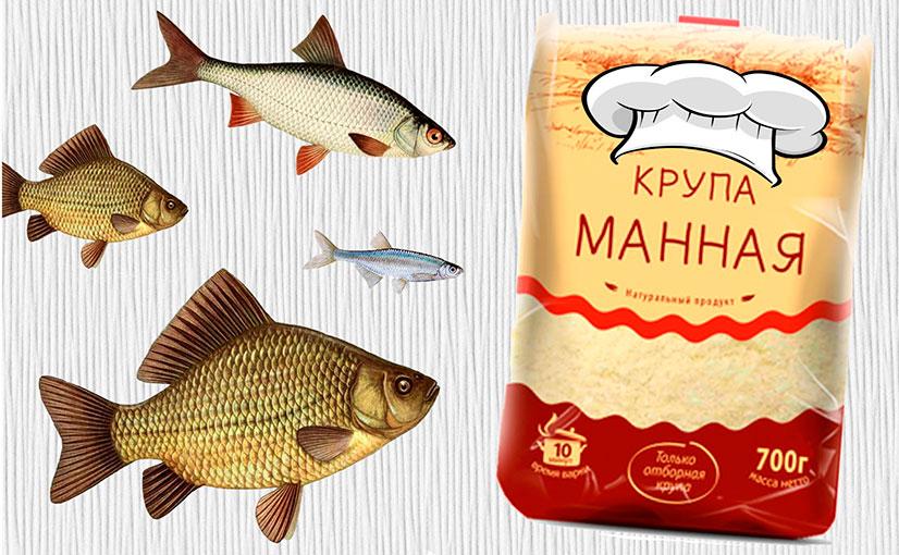 Делаем приманку из манки для рыбалки - варианты приготовления, рецепты и советы