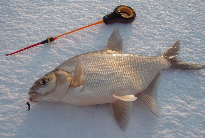 Как поймать зимой карася на мормышку - советы, особенности зимней ловли