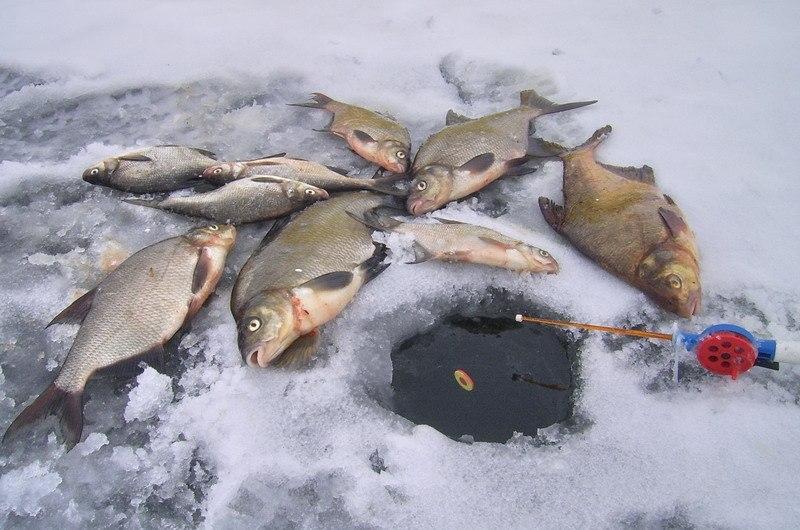 Снасть для зимней поплавочной удочки - советы и рекомендации