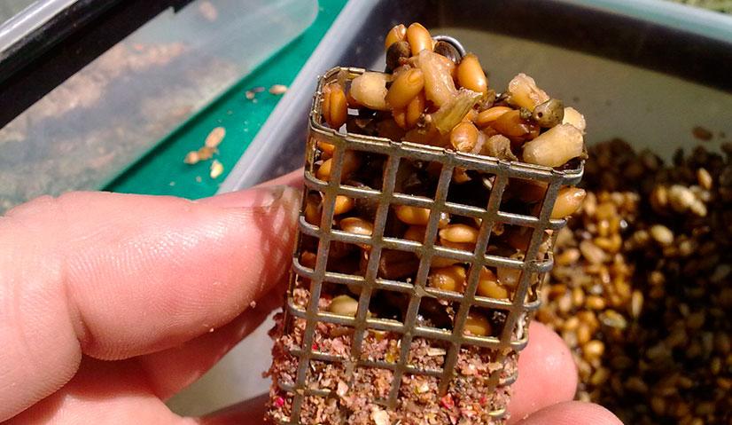 Как правильно запарить пшеницу для рыбалки?